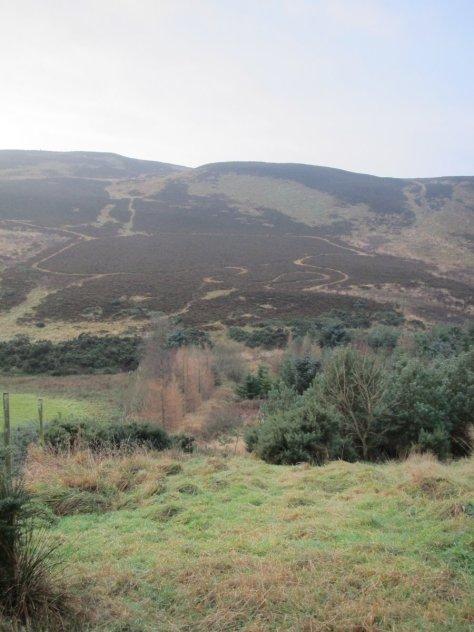 Blacklaw Hill from Ledyatt Wood