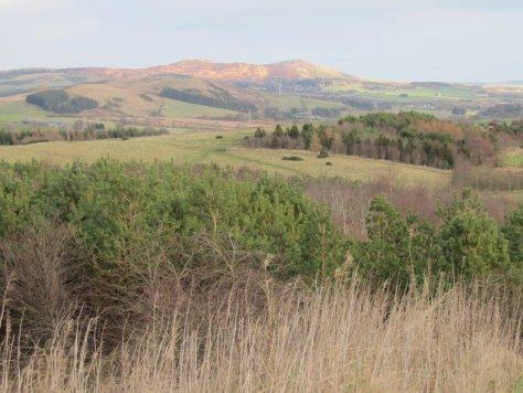 Auchterhouse Hill and Craigowl from Balshando Hill