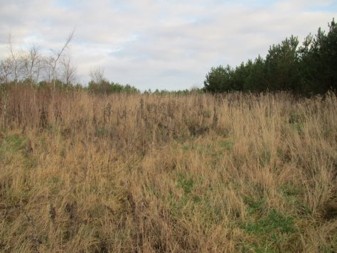 Overgrown path, Naiad Wood