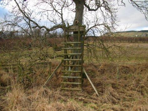 Chair in a tree, Bogle Den