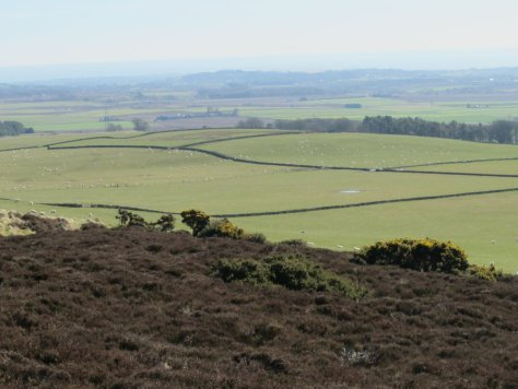 Tealing Hill from the slopes of Gallow Hill