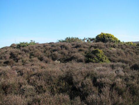Overgrown prehistoric cairn on Haston Hill