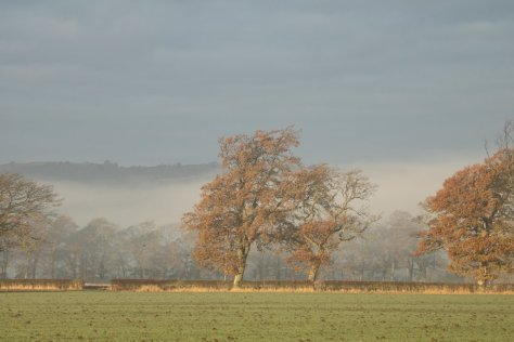 Radiation fog clearing