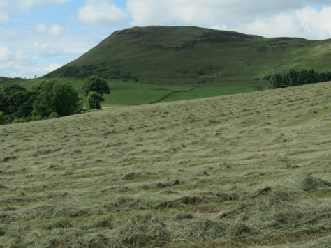 Westerkeith Hill from Palmer Wood