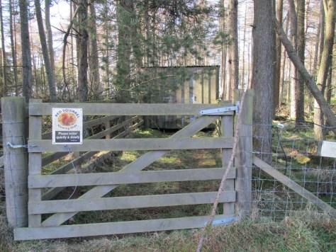Red Squirrel hide, Redmyre Estate