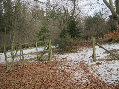 Gate in the deer fence around Rossie Hill