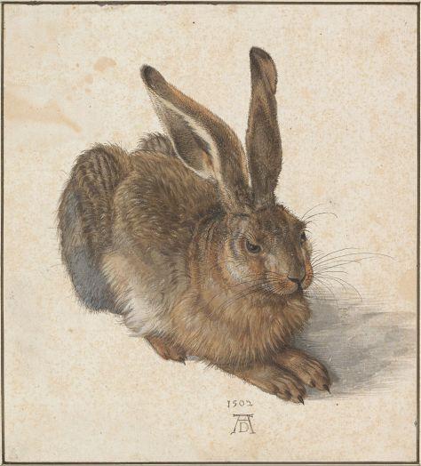 Albrecht Dürer, Feldhase