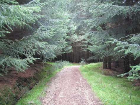 Forest track below Bennachie