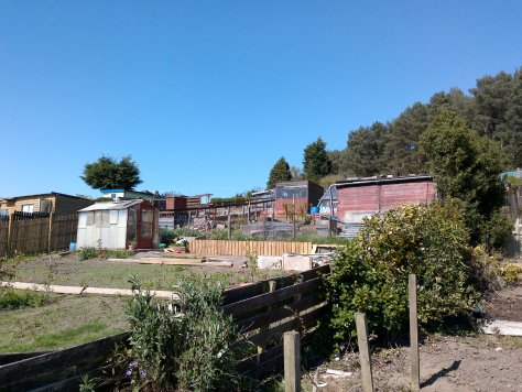 Dundee Law allotments