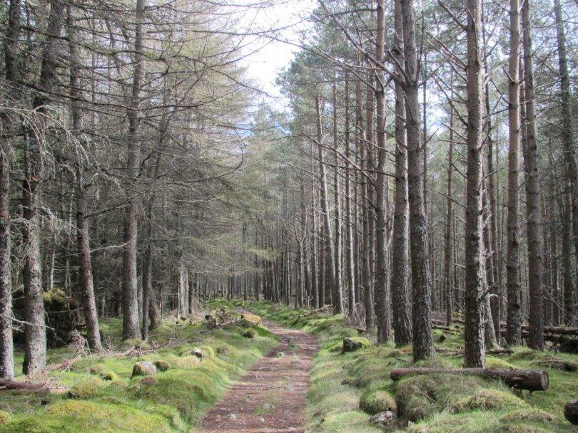 Lower part of Jock's Road, Glen Doll
