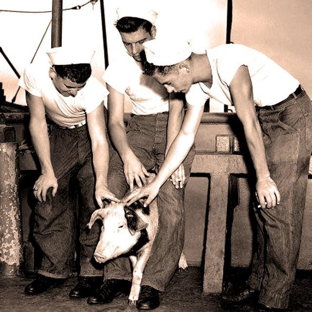Pig #311 -