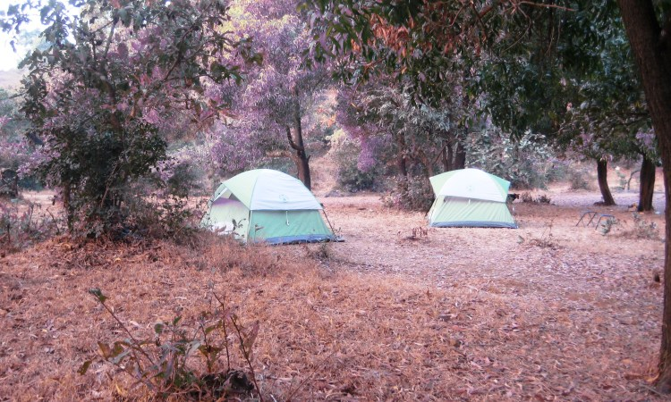Our little green tents are all set to house us!