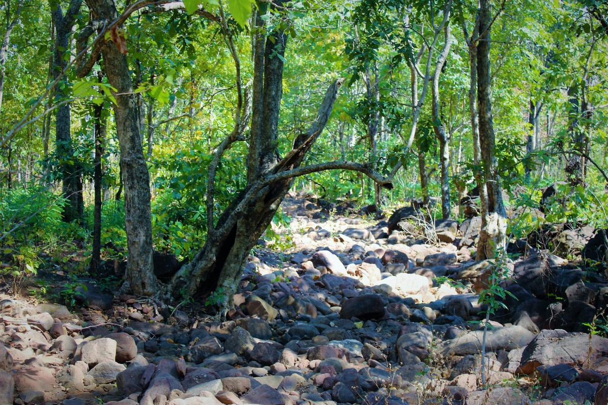 Forsyth Trail - A Hike through Satpura's Core Tiger Zone (Part 1)