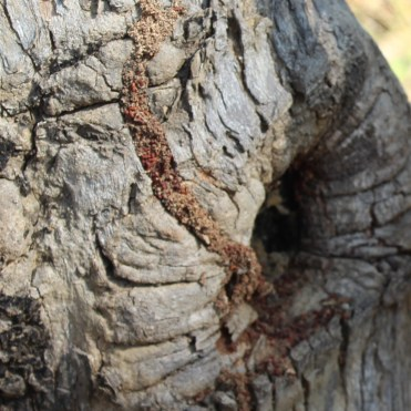 A brood of termites attacks a tree