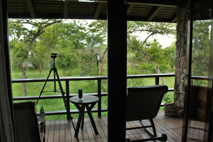 I use my verandah only for one thing - looking for birds. See how my tripod is set up and my lens and camera-phone waiting to be used?