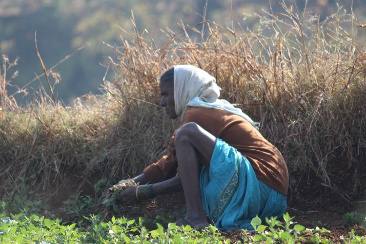 Advanced in age, this woman still begins her mornings tending to her field.