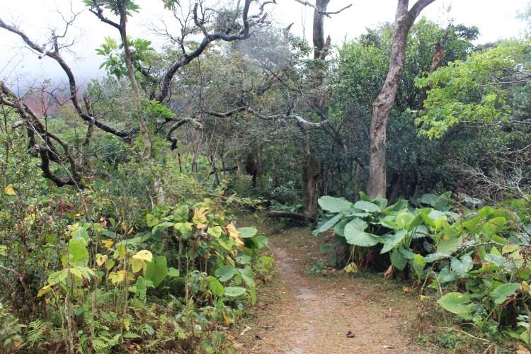 Lantau Island's Nei Lak Shan country trail looks like an adventurous one.