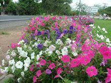 Açores florida no Dia Internacional da         Biodiversidade