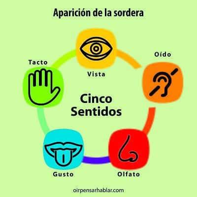 cinco sentidos_opt