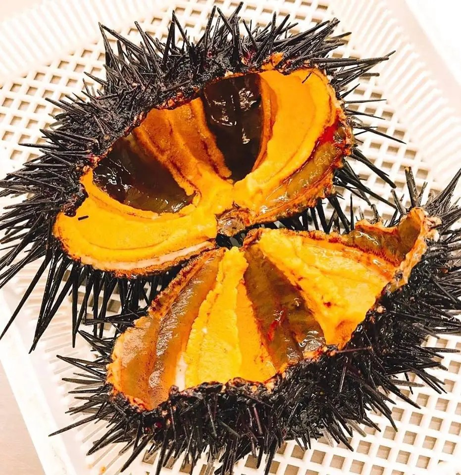 Eating Red Sea Urchin (Uni) Gonads Club