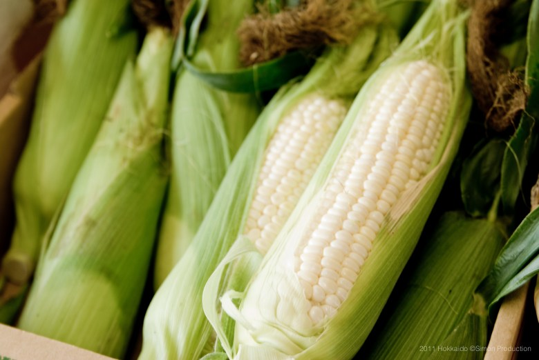 Photo Description: stalks of corn in the husk are bunched together. A few of the stalks, the husks are whisked open to show the white kernels of corn.