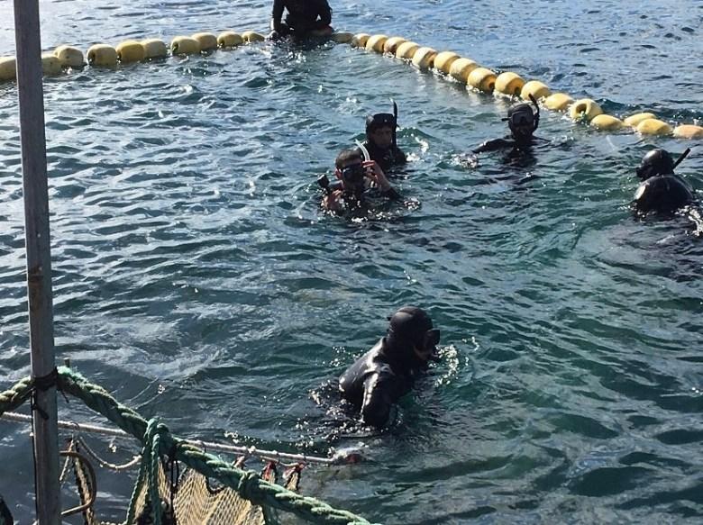 Photo Description: about 5 divers in a bluefin tuna pen.