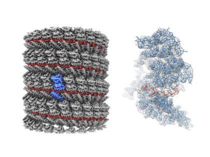 Ebola Virus Protein