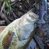 雄蛇ヶ池5/13ブルシューターJrで3本。再び満水
