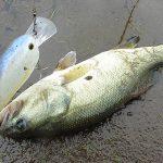 雄蛇ヶ池10/9減水1m強、SKTマグナムで1本