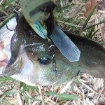 デッドスロー系クローラーベイトで釣果を伸ばす方法★よく言う「たるませ巻き」の弱点