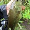 雄蛇ヶ池8/28レベルバイブで2本、ジグで1本。水位マイナス40cm