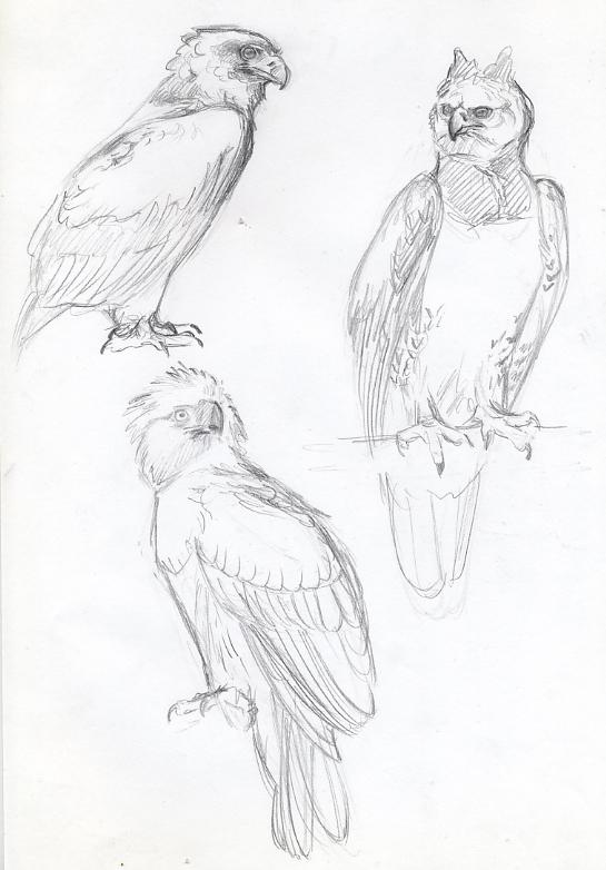 Image Of Dibujos Para Colorear De Aguila Real Dibujos de Águila para ...