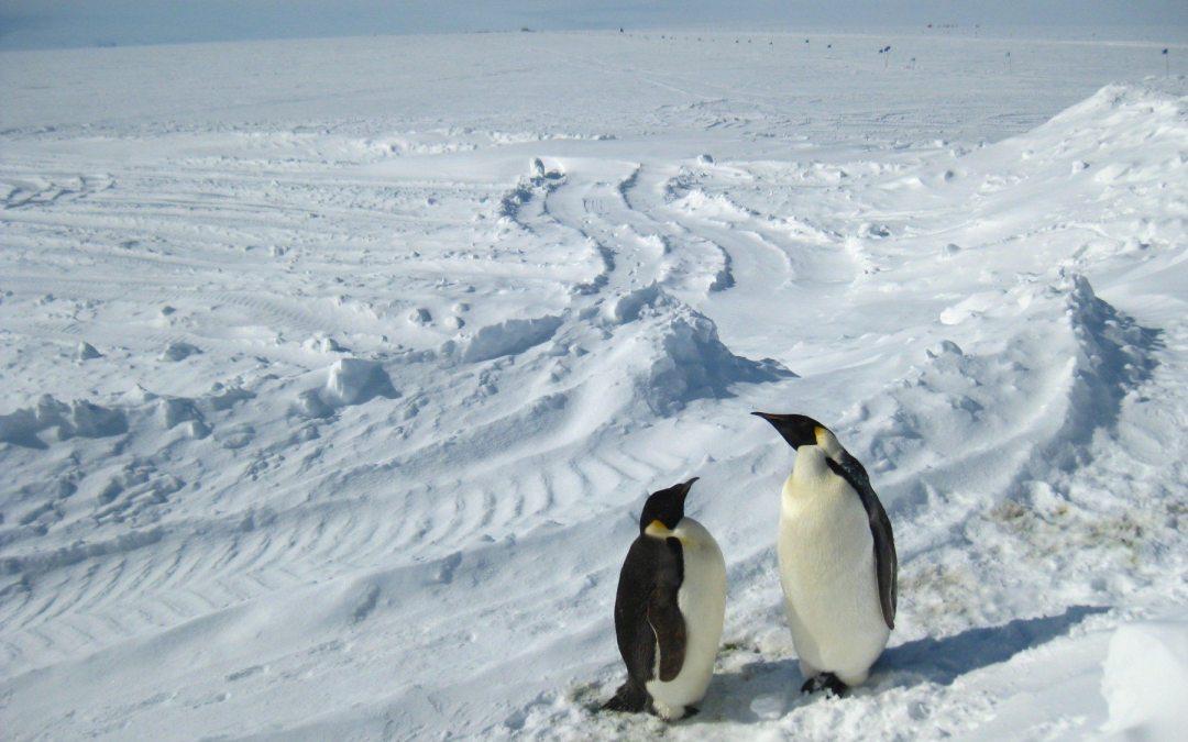 El deshielo antártico amenaza el trono del pingüino emperador