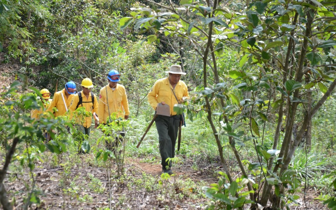 Bomberos indígenas luchan contra incendios forestales para proteger sus tierras
