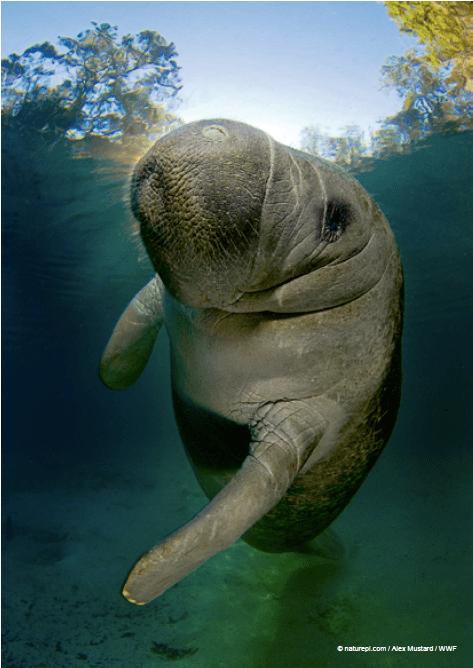 Informe Planeta Vivo 2020 de WWF América Latina perdió 94% de su biodiversidad en 46 años