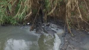 Un río con amparo2