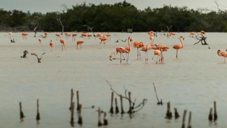Refugio de Flamencos. Costa norte de Yucatán.