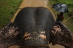 Sur le dos d'un éléphant