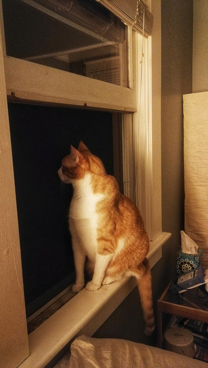 rot gestreifter Kater sitzt auf einem Fensterbrett und schaut in die Nacht
