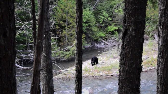 Ein Bär am Bach