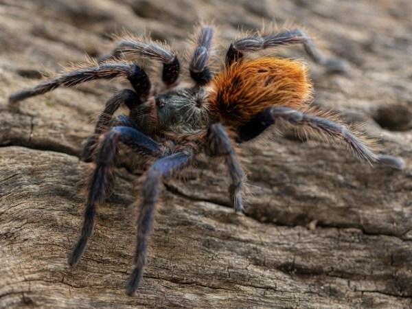 Ядовитые пауки в мире