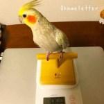 ペレット作戦(2) ペレットの粉で体重に変化!