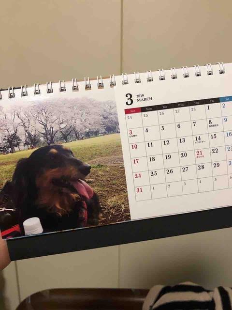 ミニチュアダックスカレンダー