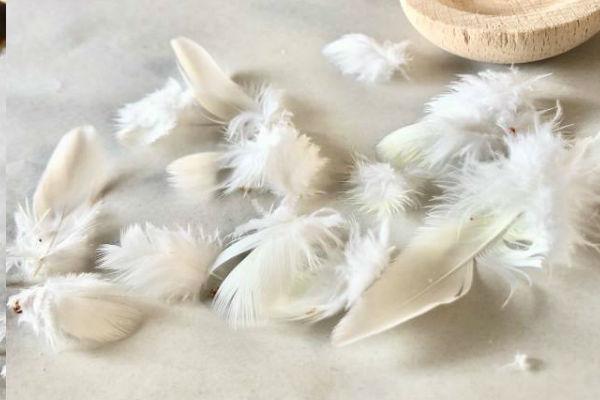 換羽期の羽