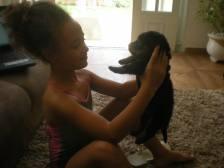 doacao-de-rottweiler-fotos-imagens-sao-paulo-sp