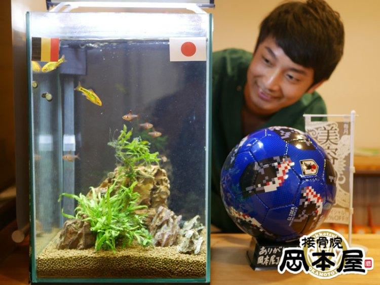 熱帯魚占い