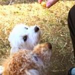 ポケモンgoから犬の散歩がブームに!保護犬が里親と出会えたりすることも!