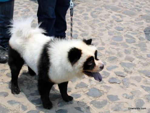 Dogs Antigua Guatemala