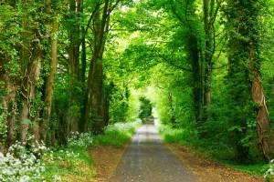 【遺族ケア】「大切な人との別れ」からの回復の道筋
