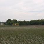 横溝正史さんの散歩コースだった池